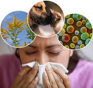alergija1