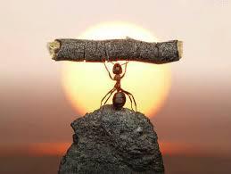 mravljica - samozavest